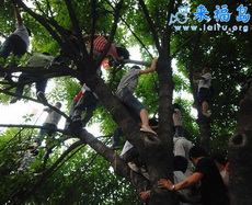 Vivimos en el árbol