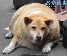 Súper perro gordo