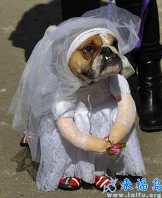 虽然我长得不漂亮,但还是可以当新娘的~