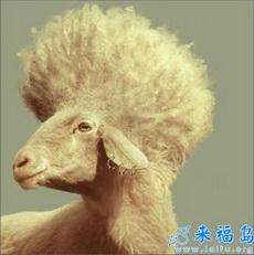El estilo de pelo más popular de 2011
