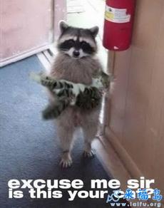 对不起先生,这是您家的猫咪吗?