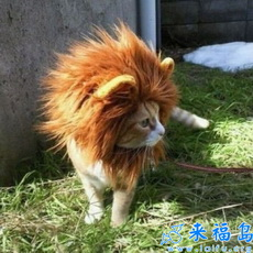 Soy un león!!!!!!