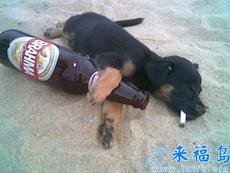 见过醉鬼没见过这样的醉鬼