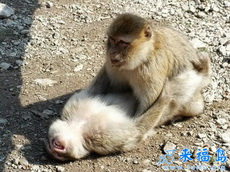 原來猴子跟人是一模一樣的