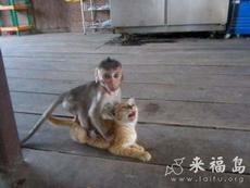小猴子竟然敢欺負小貓咪