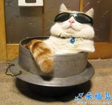 Japan cat