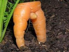 长得很个性的红萝卜