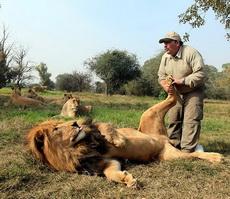 Masajista para los leones