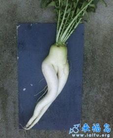这根萝卜是够销魂的