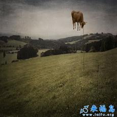 La vaca sabe volar.
