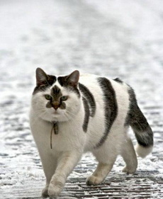 遇到一個開三菱的屌絲貓