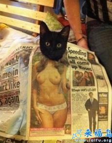 猫咪又调皮了吧