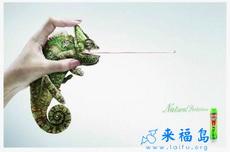 国外杀虫剂的创意广告
