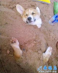 带狗狗去沙滩,狗狗一脸享受的表情