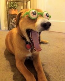 又出了一个狗狗眼镜