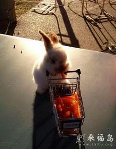 小兔子逛超市