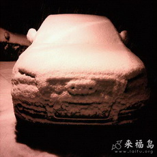Audi pig