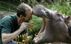河马是这样吃香蕉的
