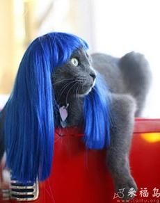 这才是蓝猫哦