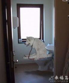 家教很好的狗狗
