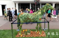 蔬菜的艺术用途
