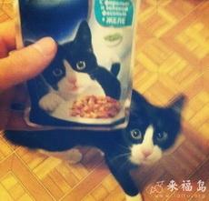 The exact same f-ing cat