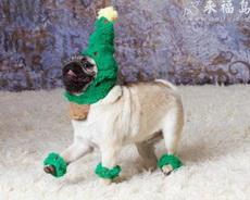 戴绿帽子的小狗