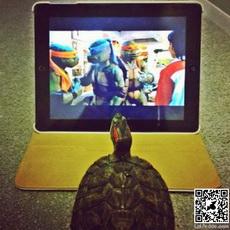 Turtle watching TV