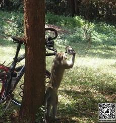 Monkey looking into mirror.