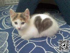 爱心小猫咪