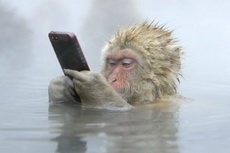 泡温泉、玩手机