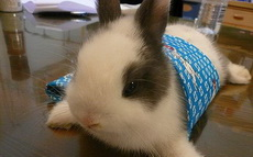 这货真的是兔子吗?