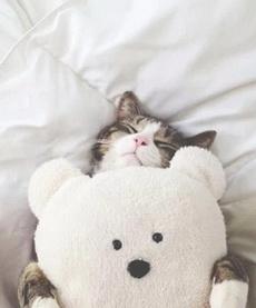 这样睡最舒服了喵!