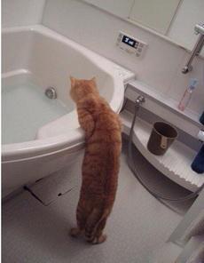 粑粑,洗澡水放好了
