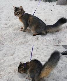 你是一只猫不是松鼠啊