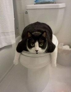 好不容易找个舒服的地方趴着,你又要上厕所?!