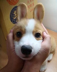 兔子还是狗啊?