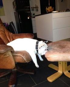 这个姿势睡觉好舒服吗?
