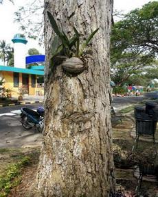 发现一棵长了眼睛和睫毛的树!