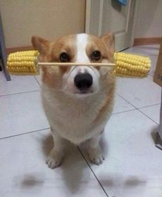 主人,现在可以吃了吗