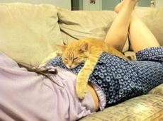 在这睡就是比沙发上舒服呀!