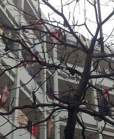 女生宿舍旁边的树,这些妹子是要闹哪样啊