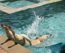 入水的姿势不能更销魂