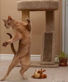 主人,来和我跳支舞吧