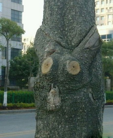 这棵树属猫头鹰的么