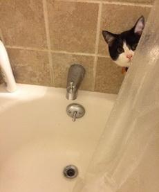 你这二货又来偷看我洗澡!