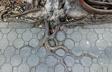 一棵有强迫症的树