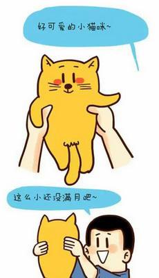 好可爱的小猫咪