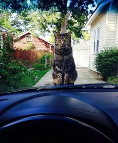 你趕緊給本喵下車,陪我玩