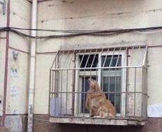 我要买个狗笼,老妈说有现成的,结果……